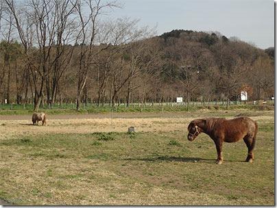 巾着田牧場
